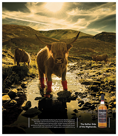 Tomatin Whisky Campaign[2] cow